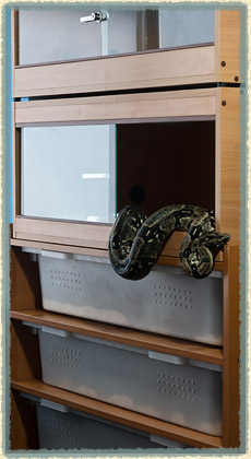 kojarzenie terrariów pg randki pro 2011 zerowane